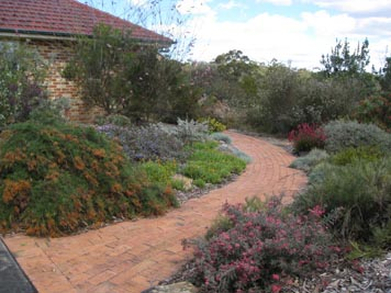 A suburban garden planted with Australian native plants.