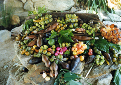 A collection of various bush foods.